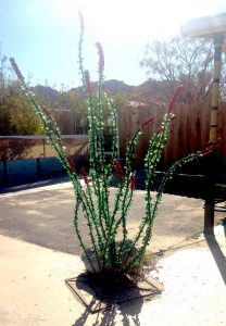 Recycled glass ocotillo
